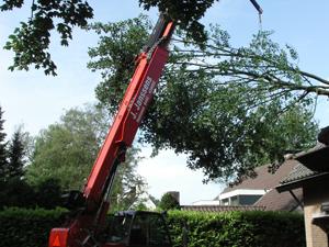 Specialistisch bomenwerk